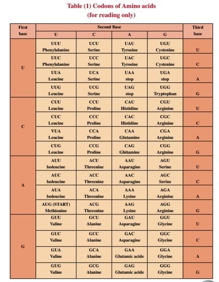 condons-amino-acids