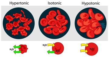 isotinic-hypotonic-hypertonic