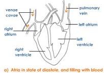 joint-diastole-1