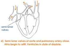 joint-diastole-4