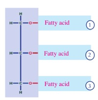 lipids-fatty-acids