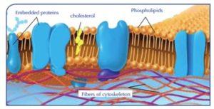 moleecules-protein