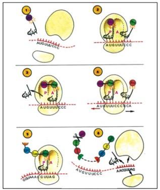 mrna-molecule