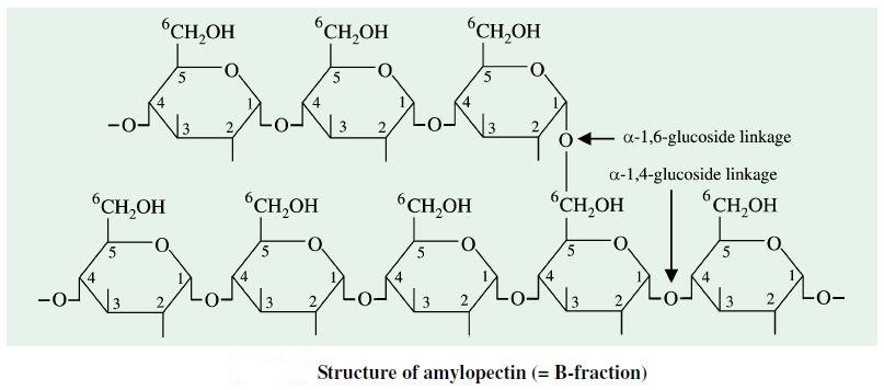 Amylopectin