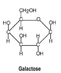 Galactose Structure Diagram Properties Of M...