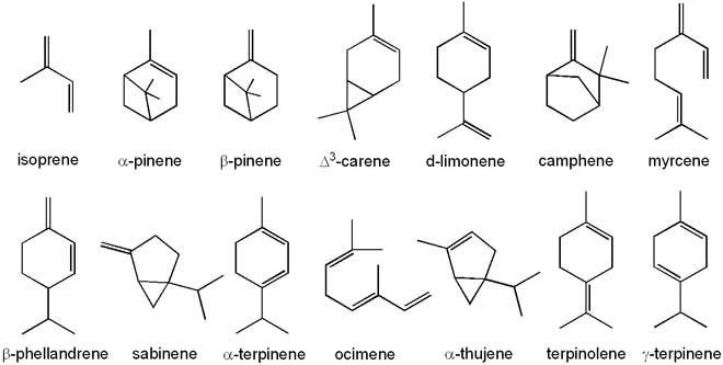 Examples of terpenes