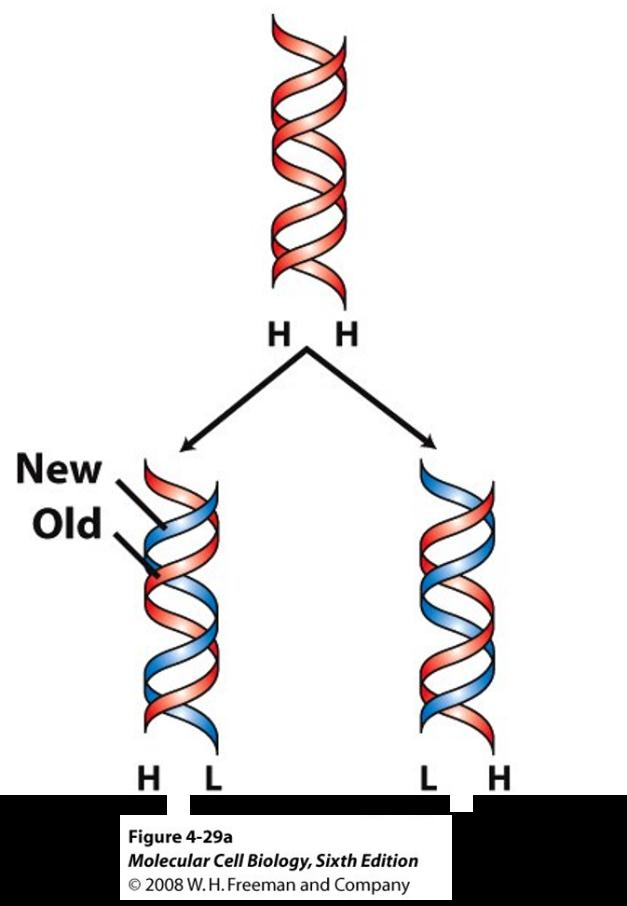 Introduction To Dna Replication