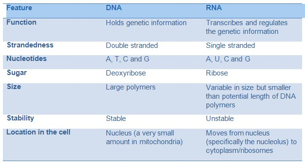 Nucleic Acids DNA And RNA A Level Biology Revision Notes