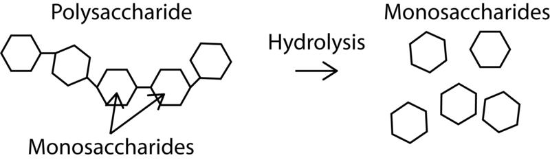 Simple_Polysaccharide_Hydrolysis